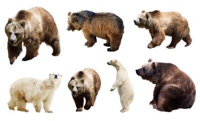 Фотообои Набор многих медведей. Изолированные на белом