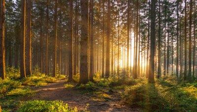 Фотообои Тихий лес весной с красивыми яркими лучами солнца