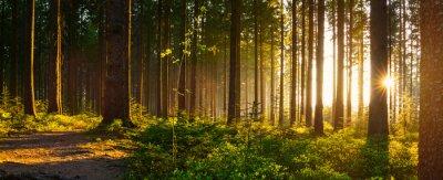 Фотообои Тихий лес весной с красивыми яркими солнечными лучами