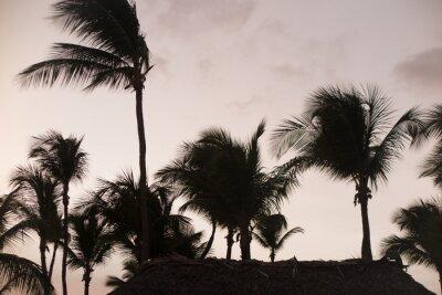 Фотообои Силуэт пальм в прекрасное время заката