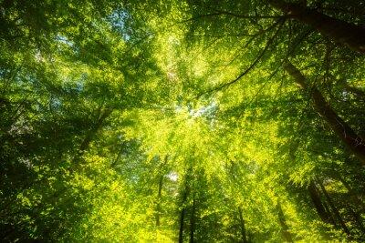 Фотообои Sonnenlicht Auf Blätterdach