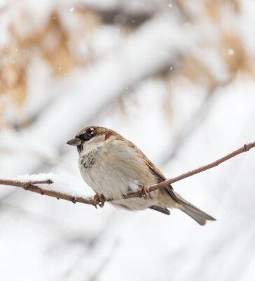 Фотообои Воробей зима природа