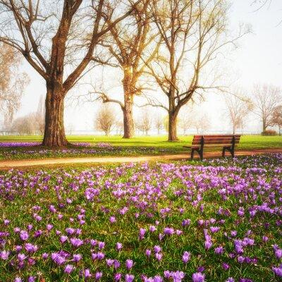 Фотообои Весенние крокусы