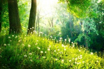 Фотообои Весна Природа. Красивый пейзаж. Зеленая трава и деревья