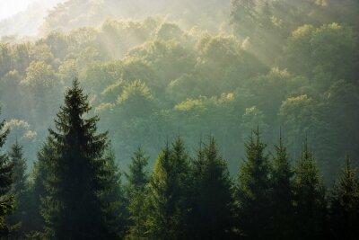 Фотообои еловый лес на туманный восход солнца в горах