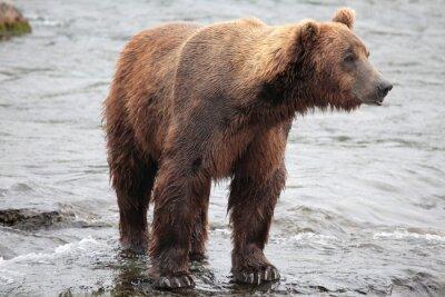 Фотообои стоя медведь, Катмай