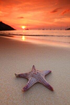 Фотообои Морская звезда на пляже