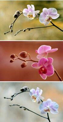 Фотообои Storczyki - tryptyk