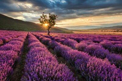 Фотообои Потрясающие пейзаж с лавандой поле на рассвете