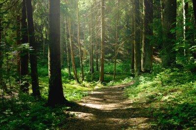 Фотообои Summer sunny forest