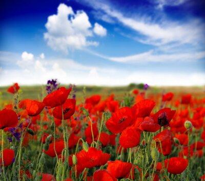 Фотообои Летние полевые цветы