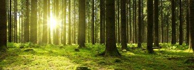 Фотообои Солнечный свет в зеленом лесу.