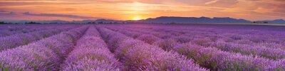 Фотообои Восход солнца над полями лаванды в Провансе, Франция