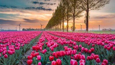 Фотообои закат tulip 05