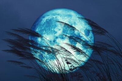Фотообои super full harvest moon on night sky back grass flower in the field