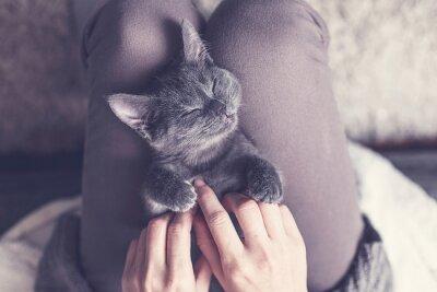 Фотообои Süßes Kätzchen Macht Эйн Nickerchen