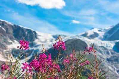 Фотообои Швейцарские Альпам с дикими розовыми цветами