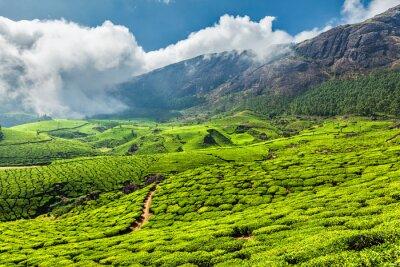 Фотообои Чайные плантации в Индии