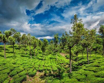 Фотообои Чайные плантации в горах