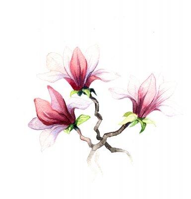 Фотообои акварель цветы магнолии, изолированные на белом фоне