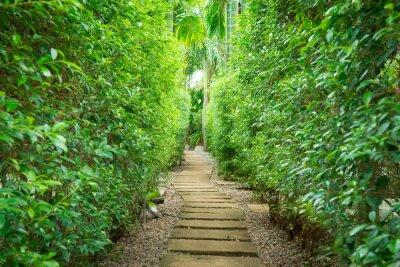 Фотообои Путь в саду