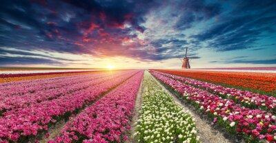 Фотообои Дорога, ведущая к голландским ветряным мельницам из канала в Роттердаме. Голландия. Нидерланды