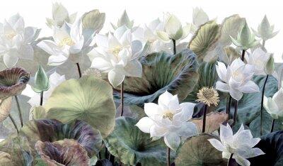Фотообои The scenic Lotus flowers.
