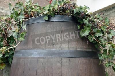 Фотообои Лоза растет из ствола дерева темного