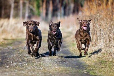 Фотообои три счастливые собаки, работающие вместе