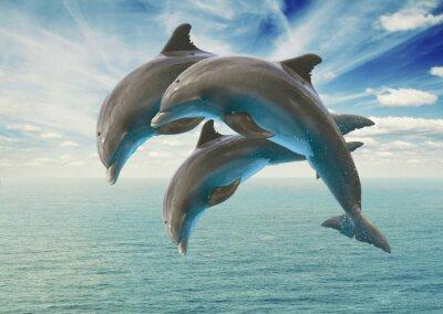 Фотообои три прыжки дельфинов