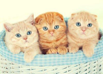 Фотообои Три маленькие котята в корзине