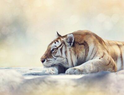 Фотообои Тигр отдыхает на скале