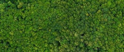 Фотообои top view on the forest panoramic
