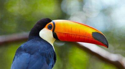 Фотообои Тукан на ветке в тропических лесах Бразилии