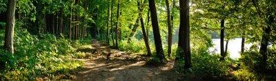 Фотообои Тропа в лесу