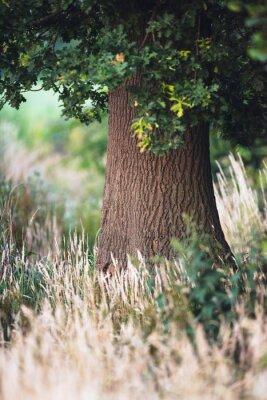 Фотообои Ствол дерева между высокой желтой травой.
