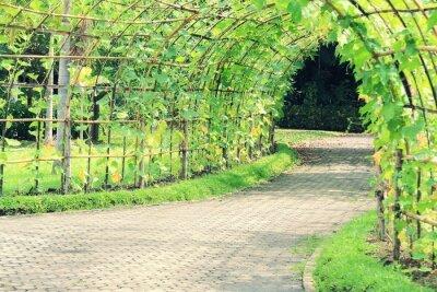 Фотообои Дерево тоннель Угловая Luffa завод