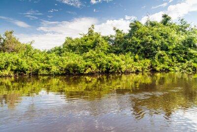Фотообои Деревья, выстилающих реки Yacuma в Боливии