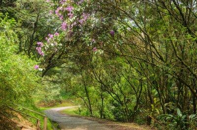 Фотообои trilha Entre árvores