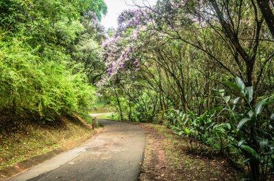 Фотообои trilha Entre árvores эм эм эм Паркетное Сан-Паулу