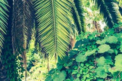 Фотообои Тропический фон пальмовых листьев