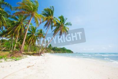 Фотообои тропический пляж с кокосовой пальмы и море
