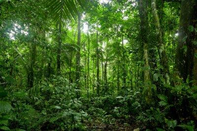 Фотообои Тропики Пейзаж, Amazon