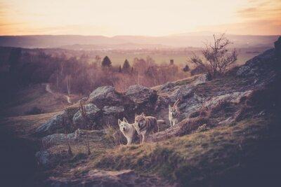 Фотообои Чехословацкий Вофльшундрюдел в горах