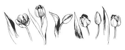 Фотообои тюльпан цветок графическая иллюстрация декоративный