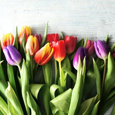 Фотообои tulipany