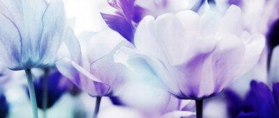 Фотообои тюльпаны голубой фиолетовый ультра легкий