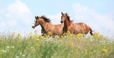 Фотообои Два каштаны лошади бегущие вместе