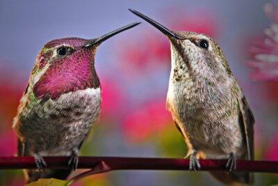 Фотообои Два колибри стоят рядом друг с другом на веточке с цветами в фоновом режиме.