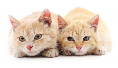 Фотообои Два красных кошек.